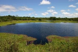 O Pantanal de Pacatuba é uma beleza a ser descoberta